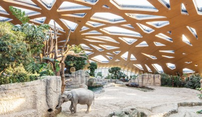 A Humane Home for Elephants at Zoo Zurich