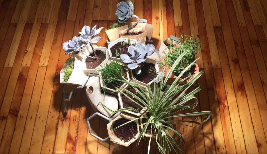 Grow Op: 5 Wild Landscape Installations on Display in Toronto