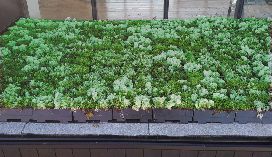 Green Roof Modules by ELT Easy Green